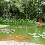 The Best Fish To Stock Your Backyard Pond With