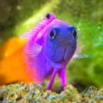 Discover the Top 5 Most Colorful Saltwater Fish and their Characteristics