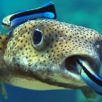 Learn Everything You Need To Know About The Cleaner Wrasse