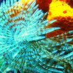 Top 5 Saltwater Hitchhikers – These are Good For Your Tank
