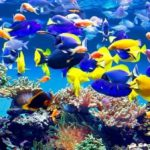 Learn How To Acclimate Fish